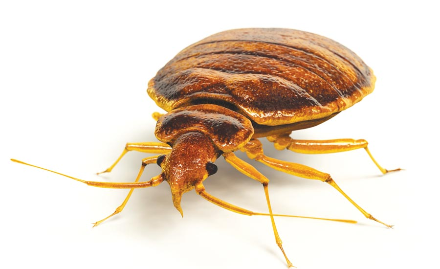 When Bedbugs Bite: A Case Study on a Severe Infestation