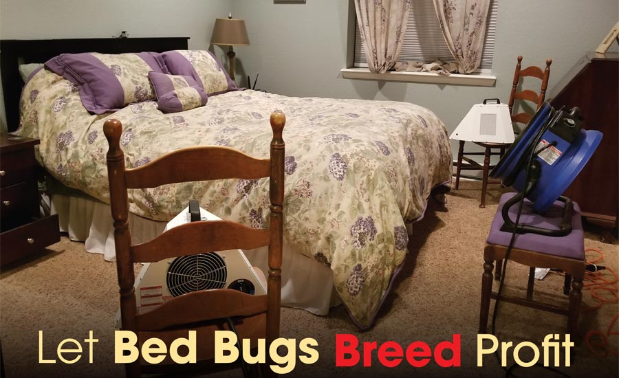 bed bugs breed profit.
