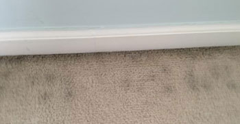 How to prevent moldy carpets
