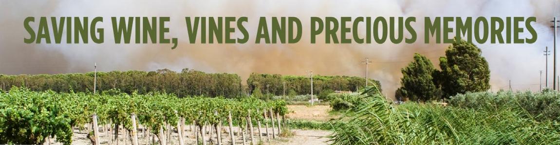 Saving Wine, Vines and Precious Memories