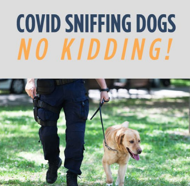 Covid Sniffing Dogs   No Kidding!